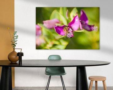 Blume lila mit Grün von Stefanie de Boer