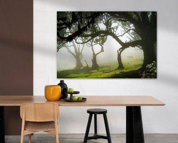 Bomen op Madeira van Michel van Kooten