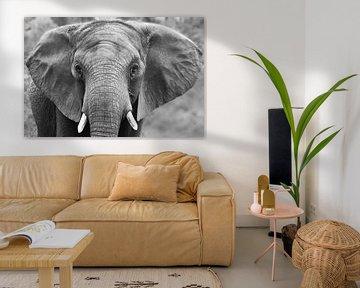 Portrait of an elephant von Tazi Brown