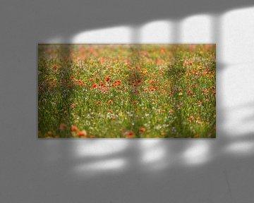 Feld der Mohnblumen und anderer Wildflowers im Frühjahr von Gea Gaetani d'Aragona