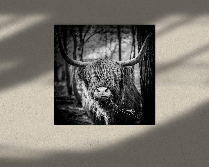 Sfeerimpressie: Schotse Hooglander van Rick Wiersma
