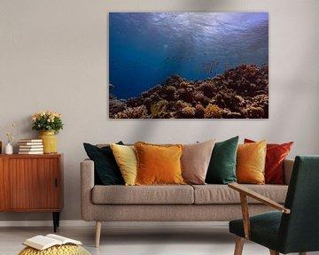The Big Blue met koraal van Eric van Riet Paap