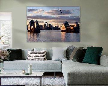 Möwen über dem Themse von Helga Novelli