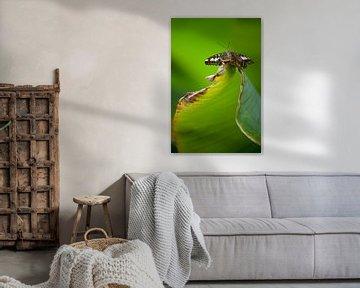 Vlinder sur Remke Spijkers