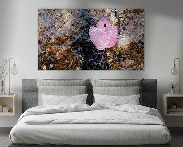 Indian Summer - herfstblad in water op rots van Remke Spijkers