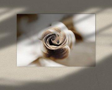 Zwart Witte Roos von Mark de Vries