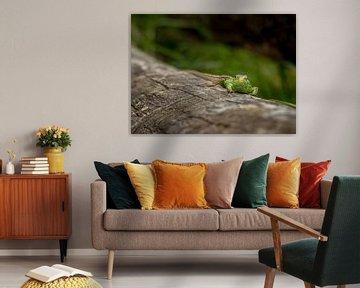 Sandeidechse auf Baumstumpf von Carla van Zomeren