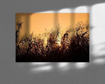Zonsondergang sur Maren Oude Essink