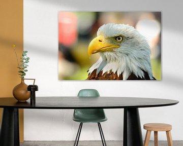 Eagle eye cherry van Mark de Vries