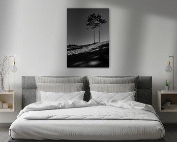 Zwei Bäume in den Dünen von Patrick Herzberg