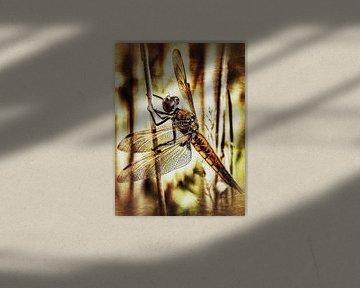 Drakenvlieg op rietstengel van Max Steinwald
