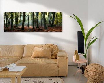 Magie in het Speulderbos - Panorama #2 van Edwin Mooijaart
