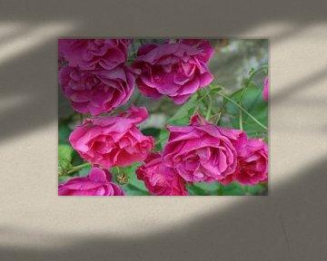 Bloemen von David Van der Cruyssen