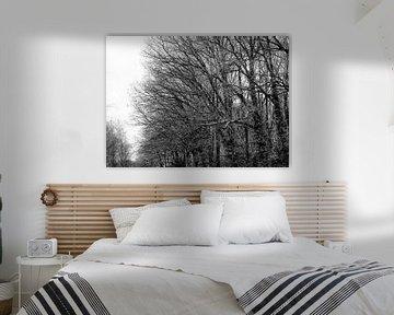 Bosrand in de winter von MCA de Graaff