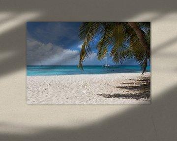Een mooi paradijs strand met palmboom op de voorgrond van Aruba Paradise Photos