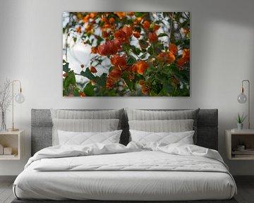 Oranje bougainville von Annemarie Arensen