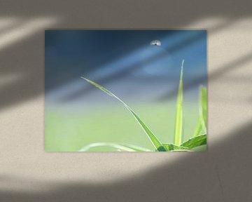 Pflanze und Insekt von Andreas Merchel