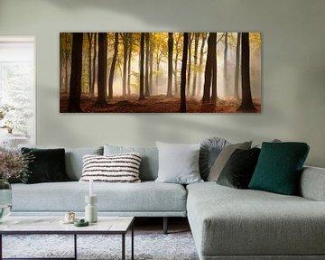 Magie in het Speulderbos - Panorama #3 van Edwin Mooijaart