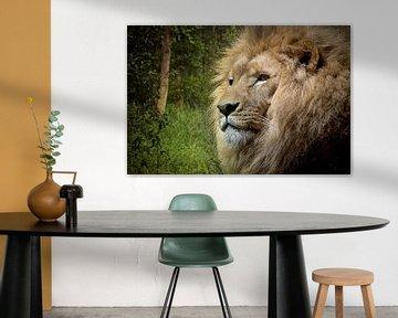 lion-grass-trees