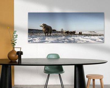 Snowy sheep van Eppo Karsijns