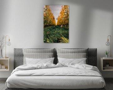 Peren boomgaard in de herfst van Prachtig  Diepenbeek