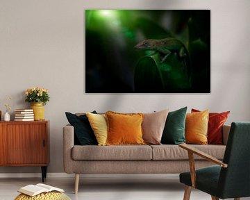 Marmer Anolis in het oerwoud von Ron Meijer Photo-Art