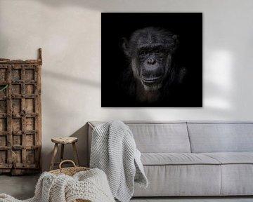 Chimpansee | Dark Animal Portrait van Ron Meijer Photo-Art