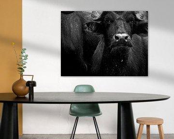 Badende Buffel van Tim Ligtvoet