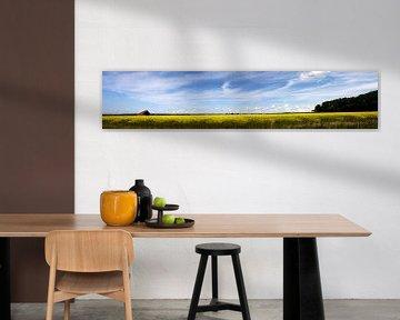 Koolzaadveld Texel van Martijn Smit
