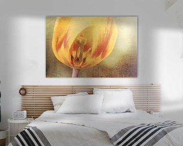 Tulp van Joanne de Graaff
