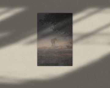 koe in de mist von Richard Boon