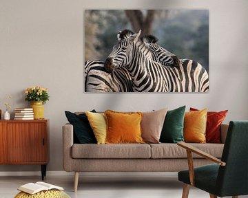 Kroelende Zebra's
