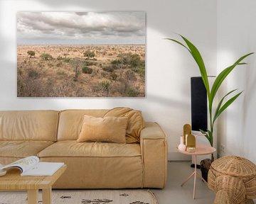 Landschap Zuid-Afrika