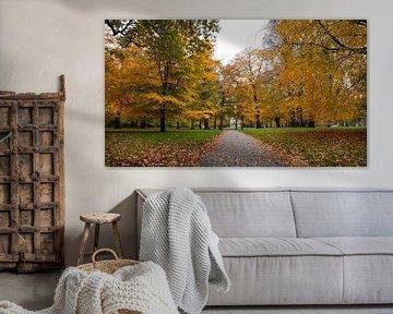 De Haarlemmerhout in volle (herfst) glorie! van Jeroen Somers