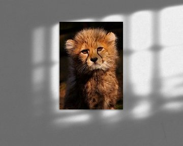 Jachtluipaard baby van Eye to Eye Xperience By Mris & Fred