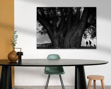 Imposante Wilg van Bo Scheeringa Photography