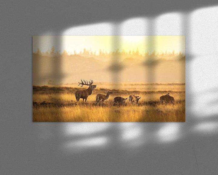 Sfeerimpressie: Kudde van Sander Meertins