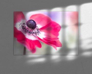 Have a look... (bloem, anemoon) van Bob Daalder