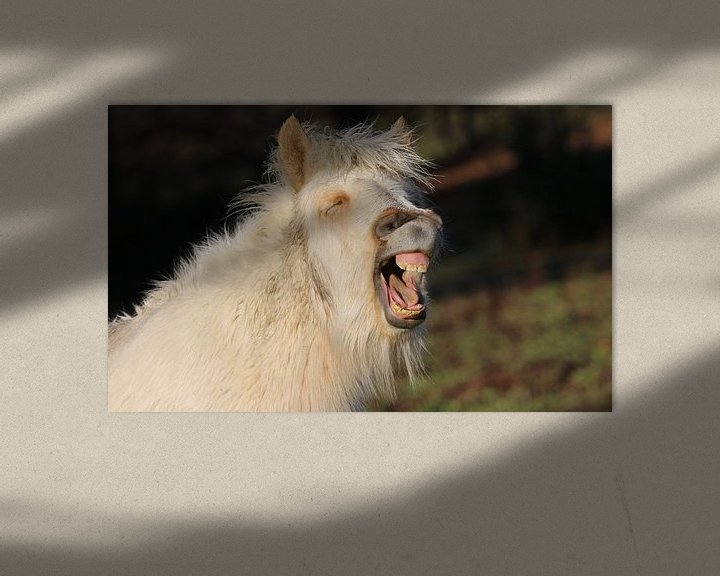 Beispiel: Lachen! von Sven Zoeteman