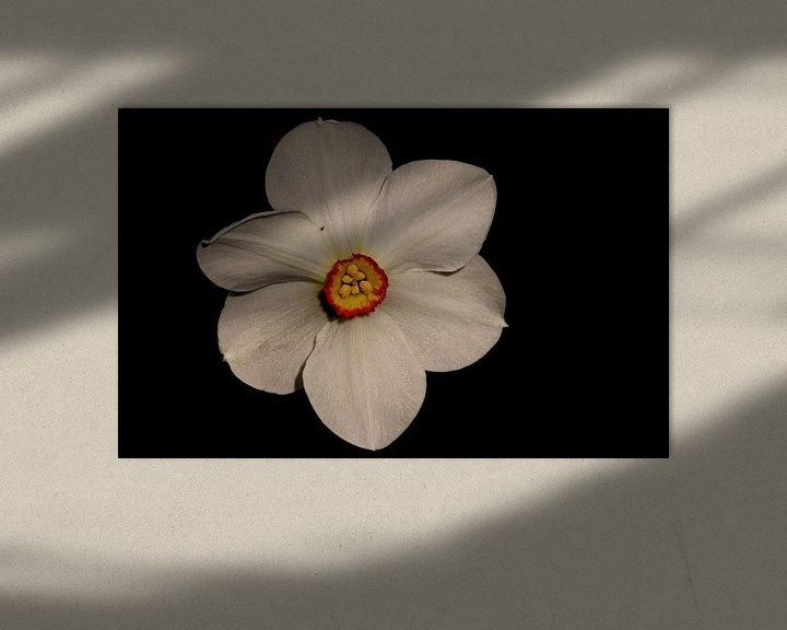 Beispiel: Narcis von Sven Zoeteman