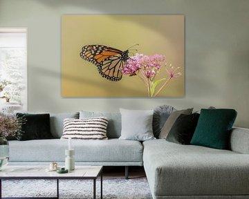 Monarchfalter. von Frank van Middelkoop