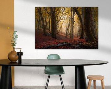 Herfst bomen in het Speulderbos van Rob Visser
