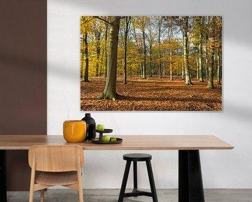 Paysage avec des hêtres colorés en automne sur Ger Beekes