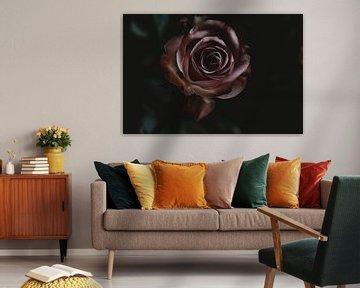 the Rose von Marije Jellema