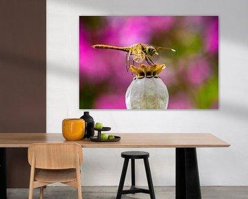 Libelle auf Blume von Eveline Dekkers