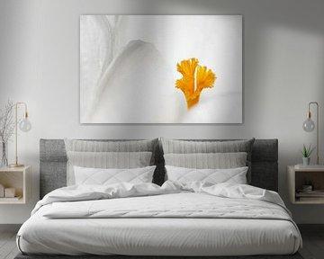 Eenvoud in wit van Marlies Prieckaerts