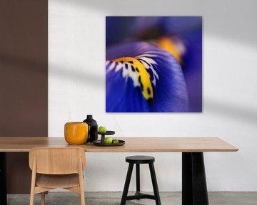 Kleurrijk paars van Marlies Prieckaerts