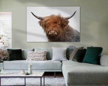 Schotse hooglander kop met grote horens 2 kleurig van Sascha van Dam