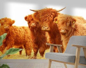 Schotse hooglanders groepje zomerkleur van Sascha van Dam