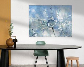 Shine Bright... (Paardenbloempluis met druppels) van Caroline Lichthart